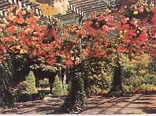 Butchart Gardens Hanging Baskets Victoria British Columbia Canada Post Card