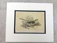 1853 Antique Print Mockingbird Mocking Bird Birds Ornithology Original Victorian