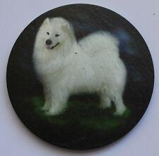 Samoyed -  Dog - Coaster - Welsh Slate