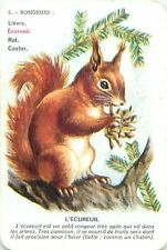 Squirrel ECUREUIL Eichhörnchen scoiattolo PLAYING CARD CARTE A JOUER OLD ANCIEN