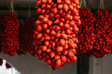 40 semi Pomodorino piennolo pendolo pomodoro tomato + OMAGGIO 5 semi GIRASOLE