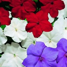 50 Impatiens seeds impatiens sun and shade hot mix old glory