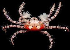 ''AQM' POM POM/BOXER CRABS,INVERTS, Conch snails ,crabs ,Live Coral,FISH
