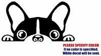 "Boston Terrier Graphic Die Cut decal sticker Car Truck Boat Window Laptop 7"""