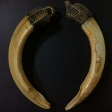 Real 2 Solid Wild Amulet Boar Pig Teeth Power Pendant Thai Amulet Talisman Luck