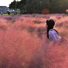 100 pcs Pink Muhly Grass(Muhlenbergia capillaris) bonsai Ornamental grass seeds