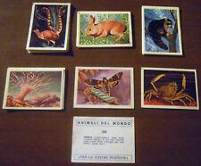 LOTTO 21 FIGURINE ANIMALI DEL MONDO (Edizioni dell'Arte 1969) RARE!