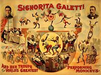 ART PRINT POSTER ADVERT CIRCUS SIGNORITA GALETTI PERFORMING MONKEYS NOFL1588