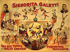 ART PRINT POSTER ADVERT CIRCUS SIGNORITA GALETTI PERFORMING MONKEYS NOFL1588