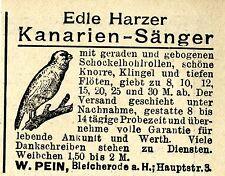 E.Pein EDLE HARZER KANARIEN-SÄNGER Historische Reklame von 1901