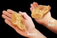 "Amber Calcite 3"" 8-12 Oz Rocks and Minerals Specimen Rough Raw Healing Crystals"