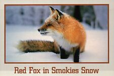 Red Fox in Snow Great Smoky Mountains National Park Tennessee - Animal Postcard