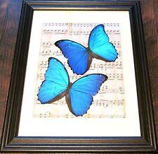 REAL FRAMED BUTTERFLIES BLUE MORPHO DIDIUS MUSIC DARK BROWN WOOD FRAME 14INX12IN
