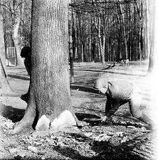 SUISSE c. 1959 - Bûcherons Abbatage Arbre Sauvabelin - Négatif 6 x 6 - Sui 157