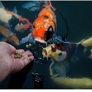 Premium grade Fish food goldfish | Catfish pellets for All Fish or tank sinking