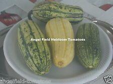 Delicata Heirloom Winter Squash Native American Seeds 1894 Called Potato Squash