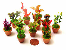 1:12 Scale Mixed Plants In Ceramic Pots Tumdee Dolls House Garden Accessory ML8