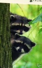 Klappkarte: zwei kleine Waschbären - de luxe