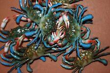 (12) Crab Shack Decor, Realistic Three-Dimensional Blue Crabs 3 3/4 inch, 12 pcs