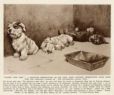More details for sealyham terrier dandie dinmont dog antique art print by cecil aldin nov 1932