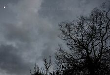 """Dark Sky, Tree with Tiny Moon, NEW ORLEANS 13x19"""" Print SIGNED by Louis Maistros"""