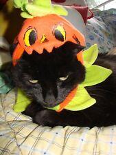 Halloween Anime Cosplay Costume Pumpkin Hat Ruffle Collar Pet Dog Cat Size XS SM