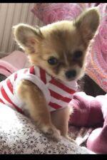 Tea Cup Chihuahua XX Piccolo Cucciolo Gattino Dimensioni Vestiti Per Cani Rosso E Bianco Strisce Top