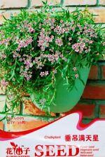 Original Package 30 Semi-Trailing Chalk plant Seeds Gypsophila Paniculata G005