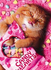 Avanti funny greeting card Valentine Valentine's love kittens candy hearts