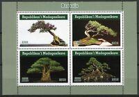 Madagascar Trees Stamps 2019 MNH Bonsais Bonsai Tree Nature 4v M/S II