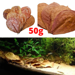 50g Catappa Indian Almond leaves ketapang leaf shrimp betta fish aquarium care
