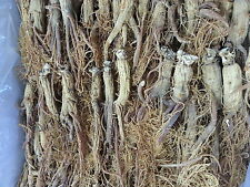 **Six years Korean Red Ginseng Root Powder 100% 120g* PANAX