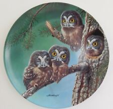 Knowles Beginning to Explore Boreal Owls Plate Joe Thornbrugh Baby Owls #6 Usa