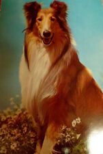Vintage Rough Collie Dog Post Card Munchen West Germany Colley Korsch