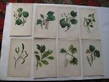 Lot of 8 Hand Colored Vintage Plates Botany Floral Branches Color Leaves Trees