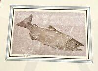 Fish Rubbing Print 17th Century Japanese w Chop - Gyotaku