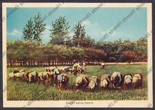 MONDINE 265 MONDARISO RISO RISAIA LAVORI AGRICOLI Cartolina viaggiata (1956 ?)