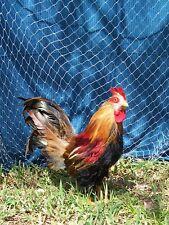 "12' x 12'  QUAIL NET POULTRY NETS GAME BIRD 45 LB. TEST CHICKEN NETTING 1""  #208"