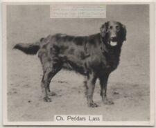 Flat Coated Retriever 1930s Champion Dog Breed Canine Pet Ad Trade Card