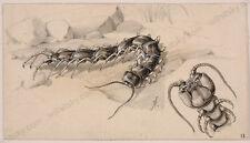 "Louis Morin (b.1855) ""Book Illustration"", ca.1900, Drawing"