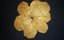 Foglie DI MANDORLO INDIANO (Terminalia Catappa Nano) 10 (8-11 cm)