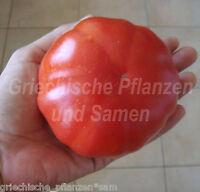 🔥 🍅 TATAR OF MONGOLISTAN Tomate Tomaten Kaukasus 10 Samen