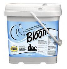 DAC Bloom 5#