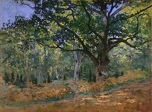 The Bodmer Oak, Fontainebleau by Claude Monet Giclee Fine Art Canvas Print