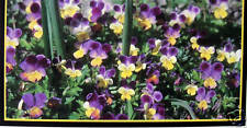 CHECKBOOK COVER LITTLE PURPLE & YELLOW FLOWERS