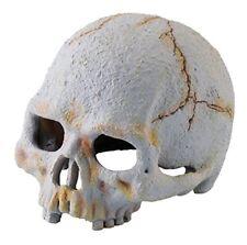 Exo Terra Décoration Crâne de Primate - pour Terrarium