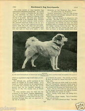 1930 Book Plate Dog Print Pyrenees Pyrenean Mountain T Cato Worsfold Bt