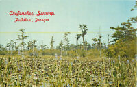 Postcard Okefenokee Swamp, Folkston, GA