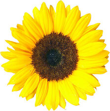 NOVELTY SUNFLOWER 12 STAND UP Edible Image Cake Toppers  flower birthday fun