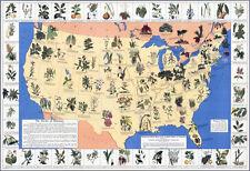 """20x30"""" CANVAS Decor.Room design art print..Medicinal American plants map.6124"""
